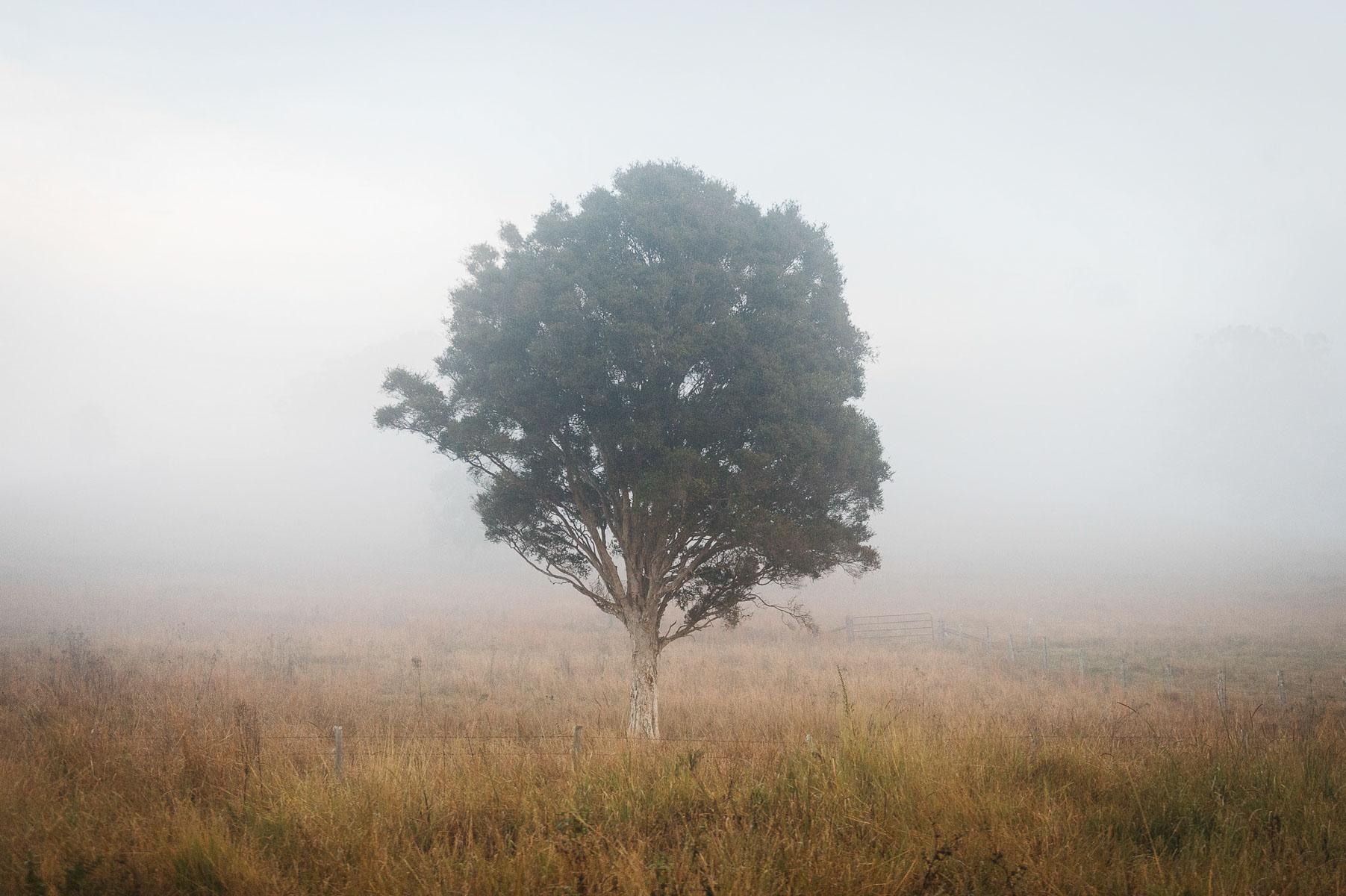 160705-dadsdeath-tree-4459