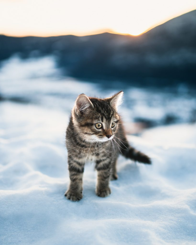 12. Winter cat Norway