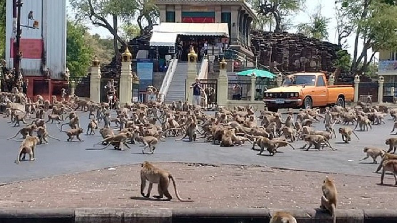 Watch Hundreds Of Wild Monkeys Take Over Thai City After